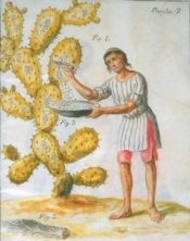 Collecting Cochineal